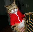 爆笑潮流猫猫演绎高中生生活_雷人恶搞