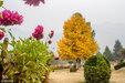 印控克什米尔:秋到斯利那加 落叶满园美如画_猎奇图片