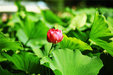 走在荷塘边拍摄美丽的荷花_植物与风景