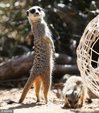 澳动物园准备圣诞美食 动物乐享大餐_猎奇图片