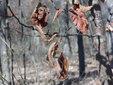 《自然界伪装高手》令人难以置信的生物拟态技术_猎奇图片