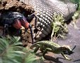 我被南方的巨型蟑螂吓闪了腰,但这并不是最可怕的_猎奇图片