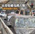 没被乌鸦过的北京人,是不完整的_猎奇图片