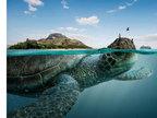 海平面以下的真相-猎奇图片