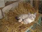 让人笑翻天的萌猫�逭�-动物