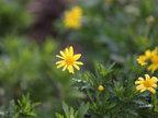 花儿的美人人欣赏拍摄各种花儿-植物与风景
