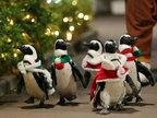 日本企鹅圣诞游行 大摇大摆萌翻天-猎奇图片