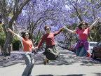 悉尼蓝花楹树绽放紫色花朵 吸引民众-猎奇图片
