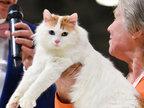 莫斯科办猫展  奇特无毛猫夺人眼球-猎奇图片
