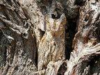 《自然界伪装高手》令人难以置信的生物拟态技术-猎奇图片