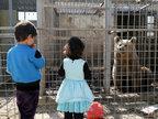 伊拉克因战废弃动物园 狮子饿成皮包骨-猎奇图片
