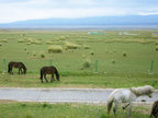 草原美景图 风光旖旎令人沉醉-美丽风景