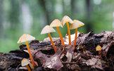 微软Windows主题《森林小蘑菇》壁纸欣赏_新品图赏