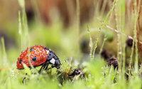 『微距摄影』Tomasz Skoczen:后花园的瓢虫小仙子