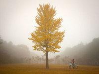 【图集】不同姿态的树木摄影作品