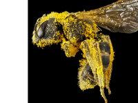 超清晰的昆虫微距摄影