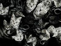 Steve Hoskins动物摄影欣赏
