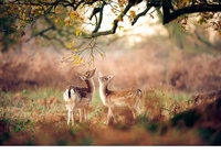 『动物摄影』秋日森林的精灵