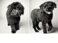 『动物摄影』20年记录下狗狗的成长