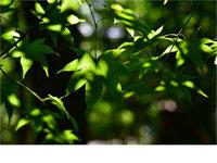 定焦新定义 腾龙新品SP45mm和SP35mm镜头样张赏析