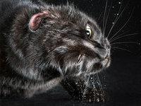 动物摄影Carli Davidson:定格喵星人爆笑甩头照