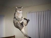 记录可爱的瞬间 飞翔的小猫咪