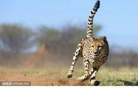 20张自由感觉的动物照片