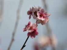 春季花開果樹花也是如此美