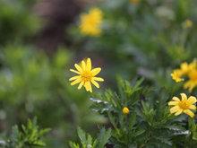 花兒的美人人欣賞拍攝各種花兒