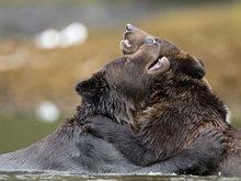 两黑熊深情相拥上演
