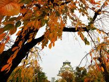 日本:大阪城公园深秋时节彩叶迷人
