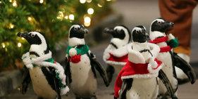 日本企鹅圣诞游行 大摇大摆萌翻天