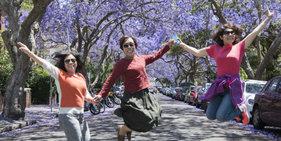 悉尼蓝花楹树绽放紫色花朵 吸引民众