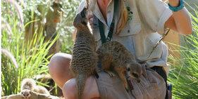 澳动物园准备圣诞美食 动物乐享大餐