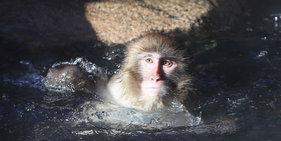 韩国爱宝乐园动物抱团晒太阳