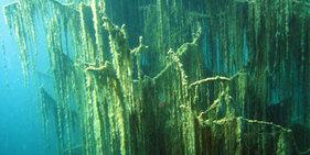 神奇!哈萨克斯坦湖泊水下森林似仙境