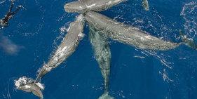 """摄影师潜水1个月拍到抹香鲸""""抱团聊天"""""""