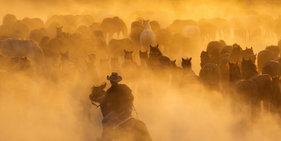 土耳其牛仔放牧画面犹如好莱坞大片