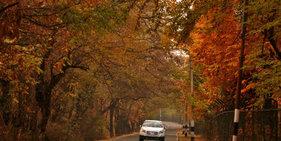 印控克什米尔:秋到斯利那加 落叶满园美如画