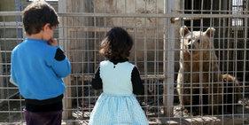 伊拉克因战废弃动物园 狮子饿成皮包骨