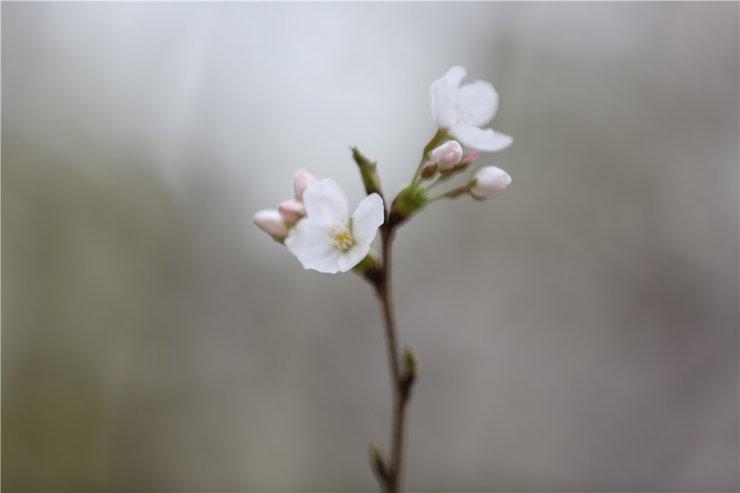 果树花儿如此迷人让人们忍不住的想要多拍几张