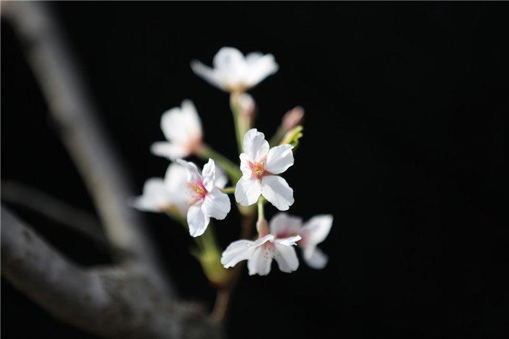美丽的春天拍摄果树花儿芳香迷人