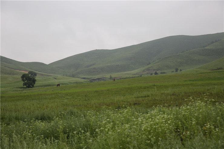 蓝天白云美丽的大草原还有远处的骏马