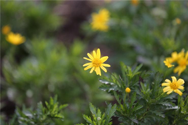 花儿的美人人欣赏拍摄各种花儿