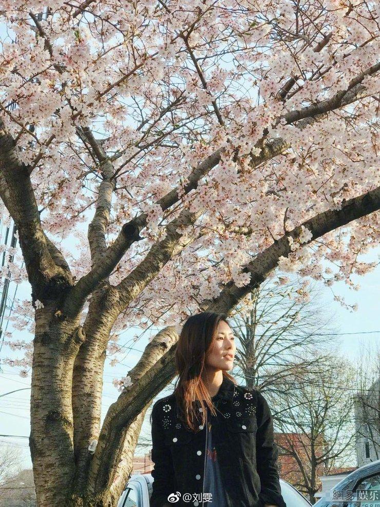 刘雯樱花树下拍美照 获赞