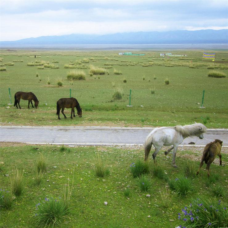 草原美景图 风光旖旎令人沉醉